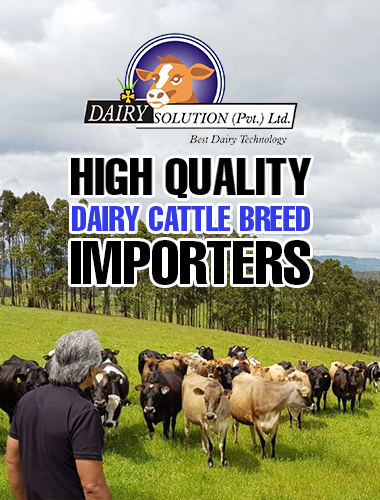 dairy cattle breed importers
