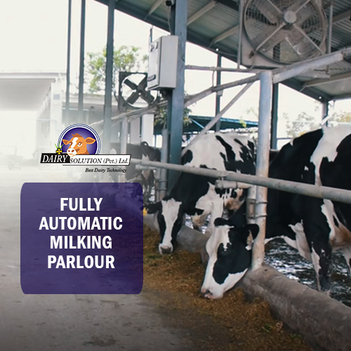 Semi Automatic Milkline System installed at Salam Dairy
